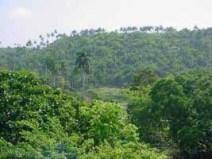 bosque-cubano.jpg